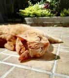 Gatto arancio in giardino floreale fotografie stock