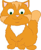 Gatto arancione felice Fotografia Stock