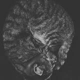 Gatto arricciato su Fotografia Stock