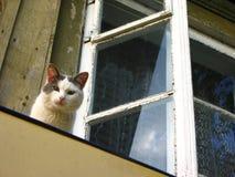 Gatto astuto Immagini Stock Libere da Diritti