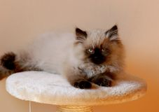 Gatto astuto Fotografia Stock