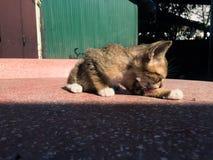 Gatto astuto Fotografia Stock Libera da Diritti