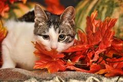 Gatto in autunno con le zucche Immagini Stock Libere da Diritti