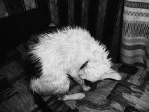 Gatto bagnato Immagini Stock