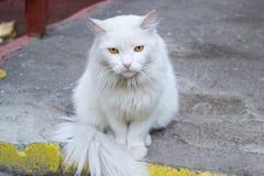 Gatto bianco Fotografie Stock Libere da Diritti