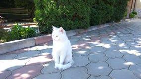 Gatto bianco Immagine Stock
