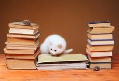 Gatto bianco che esamina il topo della peluche Immagine Stock Libera da Diritti