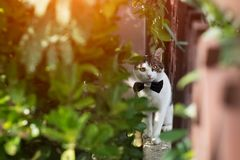 Gatto bianco con la cravatta a farfalla nell'aria aperta, con l'occhi rossi fotografia stock libera da diritti