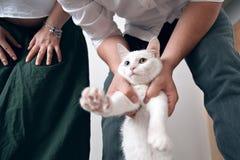 Gatto bianco con un occhio azzurro ed un occhio verde È stato inviato ad un nuovo appartamento housewarming fotografia stock libera da diritti