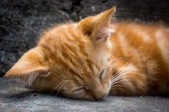 Gatto bianco dello zenzero che si trova e che dorme sulle scale grige fotografia stock