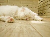Gatto bianco di sonno immagine stock libera da diritti