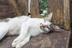 Gatto bianco e grigio Immagini Stock Libere da Diritti