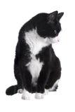 Gatto in bianco e nero Immagini Stock
