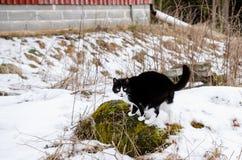 Gatto in bianco e nero Fotografia Stock Libera da Diritti