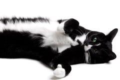 Gatto in bianco e nero Fotografie Stock