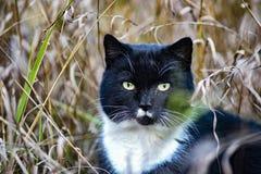 Gatto in bianco e nero cercato nell'erba fotografia stock