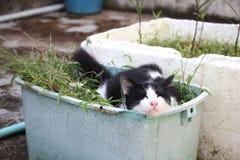 Gatto in bianco e nero che dorme nel canestro di plastica blu della pianta Fotografia Stock Libera da Diritti