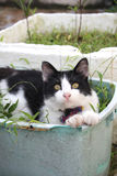 Gatto in bianco e nero che si siede nel canestro della pianta Immagini Stock Libere da Diritti
