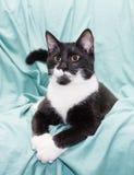 Gatto in bianco e nero con la menzogne degli occhi di giallo swaggered Immagini Stock