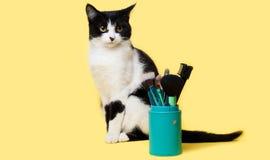 Gatto in bianco e nero con una spazzola per trucco immagini stock libere da diritti