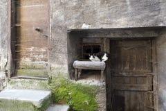 Gatto in bianco e nero in facciata antica di medievalhouse in città francese di guillestre Fotografia Stock