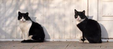 Gatto in bianco e nero identico due fotografia stock libera da diritti