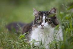 Gatto in bianco e nero su un'erba Immagini Stock Libere da Diritti