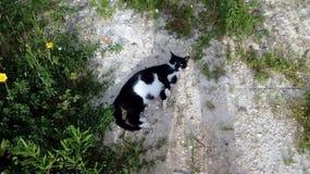 Gatto in bianco e nero sull'erba verde fotografia stock