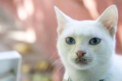 Gatto bianco Selezioni il fuoco Fuoco molle Immagini Stock Libere da Diritti