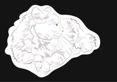 Gatto bianco su fondo nero immagini stock