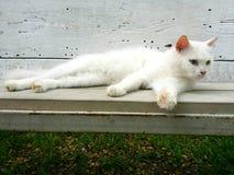 Gatto bianco sul banco Fotografia Stock