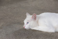 Gatto bianco sul pavimento ruvido del cemento Fotografie Stock Libere da Diritti
