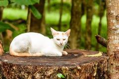 Gatto bianco sull'albero Immagini Stock Libere da Diritti