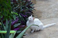 Gatto bianco sveglio, nuova foto 2018 immagine stock libera da diritti