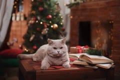 Gatto britannico grigio Fotografie Stock