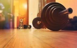 Gatto britannico su un fondo del bilanciere atletico nella stanza di estate, concetto del bello culturista dello stile di vita sa Immagini Stock