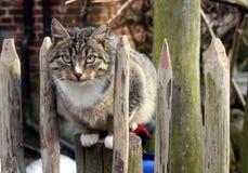Gatto brunastro Fotografia Stock Libera da Diritti