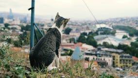 Gatto buffo che si siede e che studia ai tetti di piccola città georgiana nel slo-Mo archivi video
