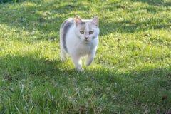 Gatto-cacciatore del villaggio su fondo verde Individuazione dell'alimento Gatto bianco immagini stock libere da diritti