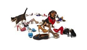 Gatto, cane e scarpe Immagini Stock Libere da Diritti