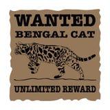 Gatto carente del Bengala fotografia stock libera da diritti