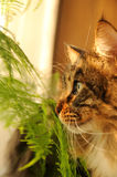 Gatto in casa Fotografie Stock