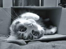 Gatto in casella Fotografia Stock