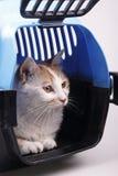 Gatto in casella di trasporto Immagine Stock