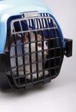 Gatto in casella di trasporto Immagini Stock