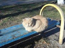 Gatto castano dorato dell'iarda Fotografie Stock Libere da Diritti