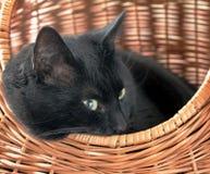 Gatto in cestino Fotografie Stock Libere da Diritti