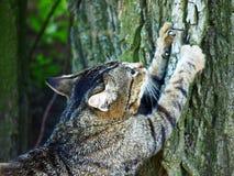 Gatto che affila gli artigli su un albero. Immagini Stock Libere da Diritti