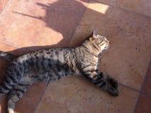 gatto che allunga sul pavimento Immagine Stock