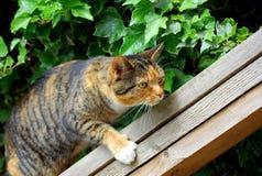 Gatto che arrampica un certo legno Fotografia Stock